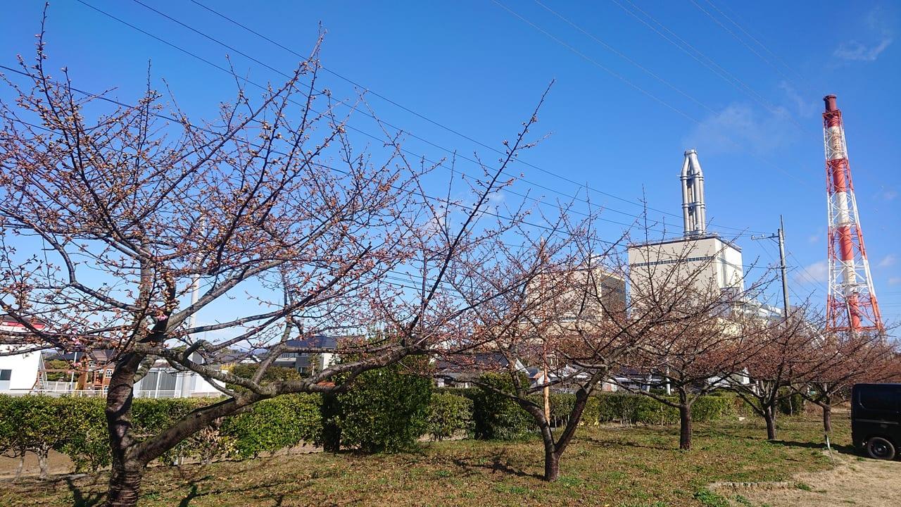 火力発電桜